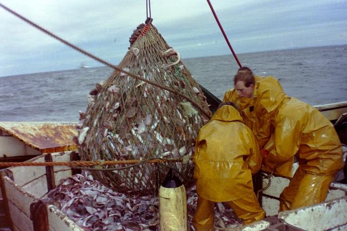 Bag of White Fish - Jpeg